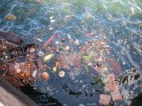 Чистое плаванье, или как утилизируют отходы на морской кухне