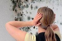Что такое плесень и как с ней бороться? условия появления и развития, опасность плесени