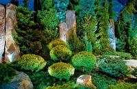 Чудесные превращения лесной красавицы