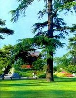 Газон-зеленый ковер для сада. устройство газона, определение, разновидности. создание газона на приусадебном участке