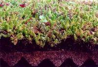 Полимерные кровельные материалы и озеленение крыш