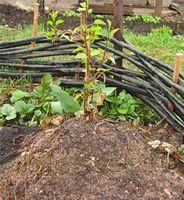 Посади свой сад. посадка саженцев деревьев: время, саженцы, подготовка посадочных ям, уход