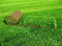 Рулонные газоны. озеленение с помощью газона в рулонах