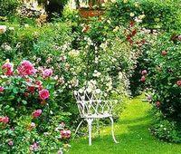Сад одного цветка