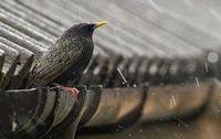 Выгнать птиц из-под крыши